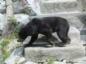 Sun Bear at Wildlife Park - Sunway Lagoon Malaysia Zoo