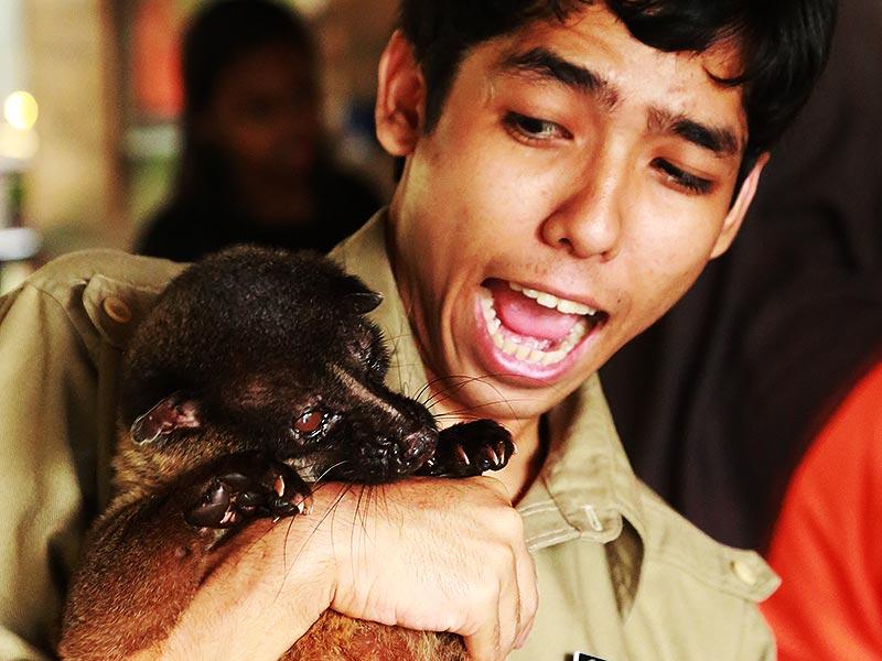 Enchanting Exhibits at Wildlife Park - Sunway Lagoon Malaysia Zoo