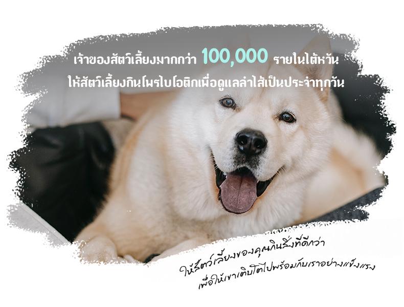 เจ้าของสัตว์เลี้ยงมากกว่า 100,000 รายในไต้หวัน สำหรับสุนัข