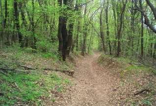 Hársbokor-hegy