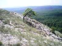 Tarnai-pihenő