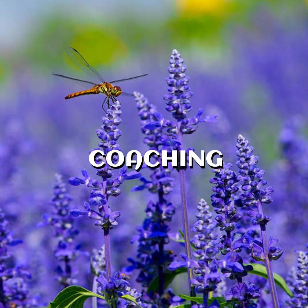 Coaching Service Image