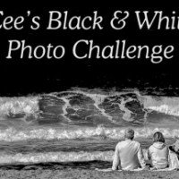 Cee's Black & White Photo Challenge: Any Kind of Bricks or Stone Walls, Walks or Roads