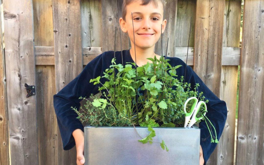 5 herbes aromatiques à faire impérativement découvrir à vos enfants !