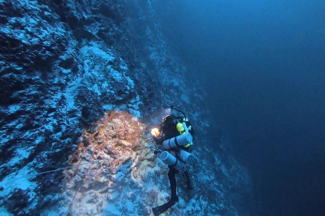Mergulhador iluminando corais.
