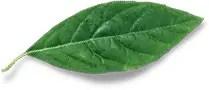 Superboss blog - greel leaf image