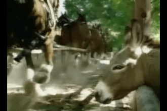 2004 Budweiser Donkey wants to be a clydesdale Super Bowl ad