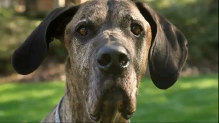 Doritos – Man s Best Friend (2012)
