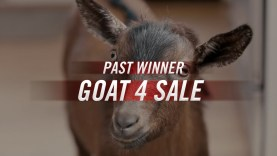 "[VIDEO] Doritos 2013 Super Bowl XLVII Commercial ""Goat for Sale"""