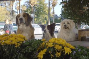 "Doritos Contest ""Doritos Dogs"" entry top 3 Super Bowl 50"