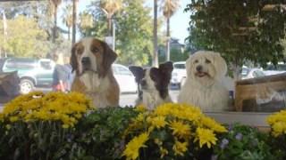 """Doritos 2016 Super Bowl 50 Ad """"Doritos Dogs"""""""
