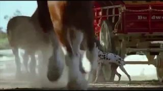 2009_budweiser_fetch_dvd.original