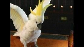 2005_bud_light_parrot