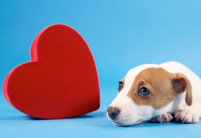 Cuidados especiales para su corazón