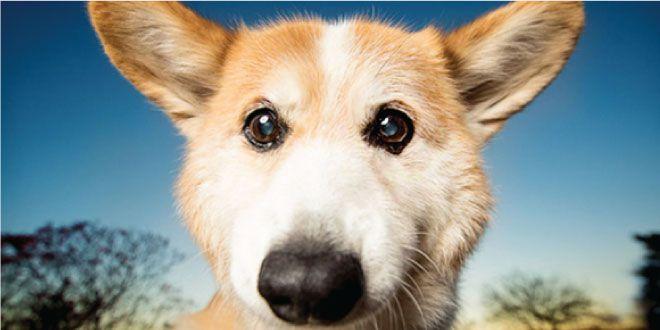 23 Hechos Sobre Los Perros Que Te Sorprenderán