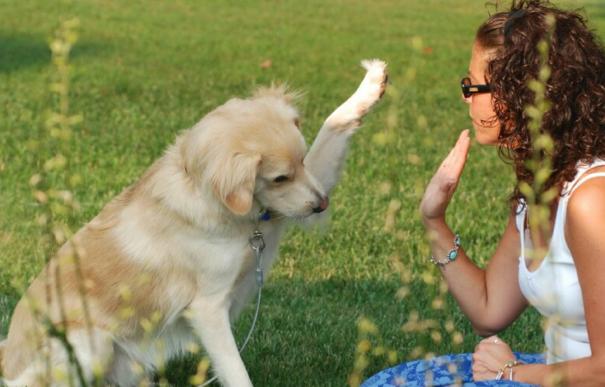 Resultado de imagen para perros tiernos y sus amas