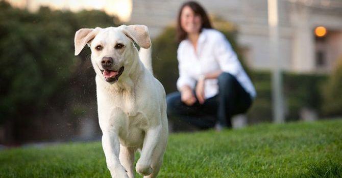 10 Cosas Saber Perro