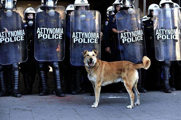 riotdog