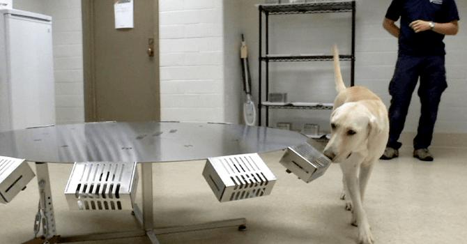 El Olfato Canino Inspira A Crear Nuevas Tecnologías