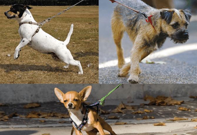 ¿Cómo evitar que mi perro se jale de la correa?