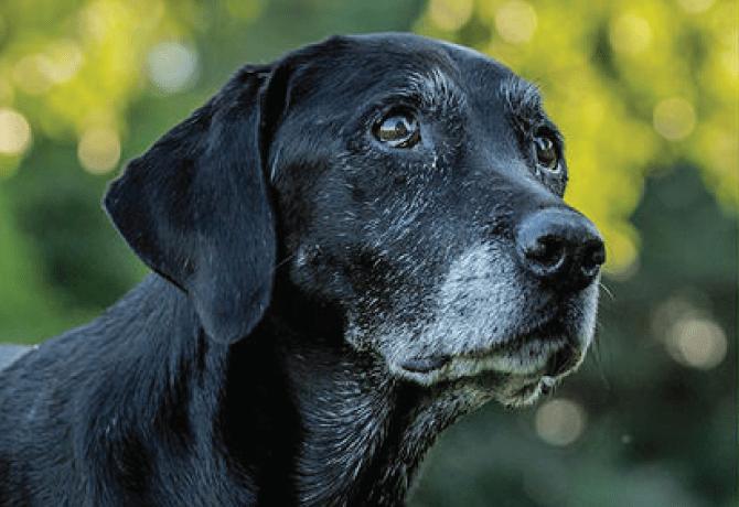 ¿Mi perro puede sufrir arritmia?
