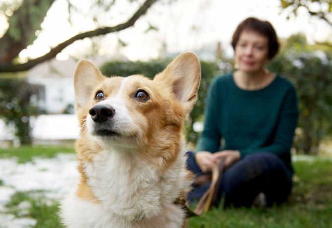 Los perros ayudan a disminuir infartos