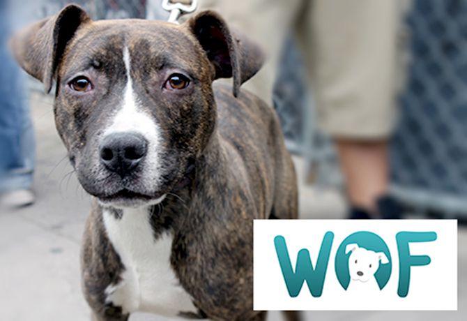 WOF: Aplicación internacional para ayuda animal
