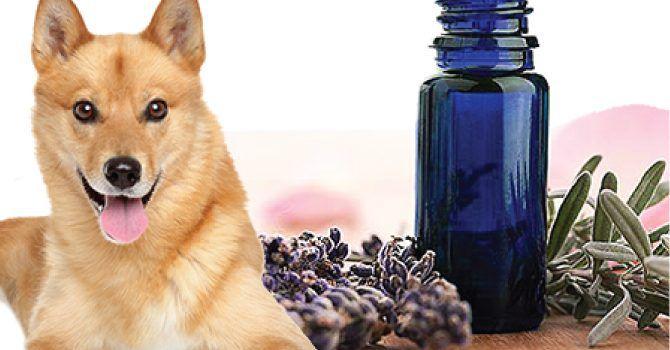 Image result for aceites esenciales para perros