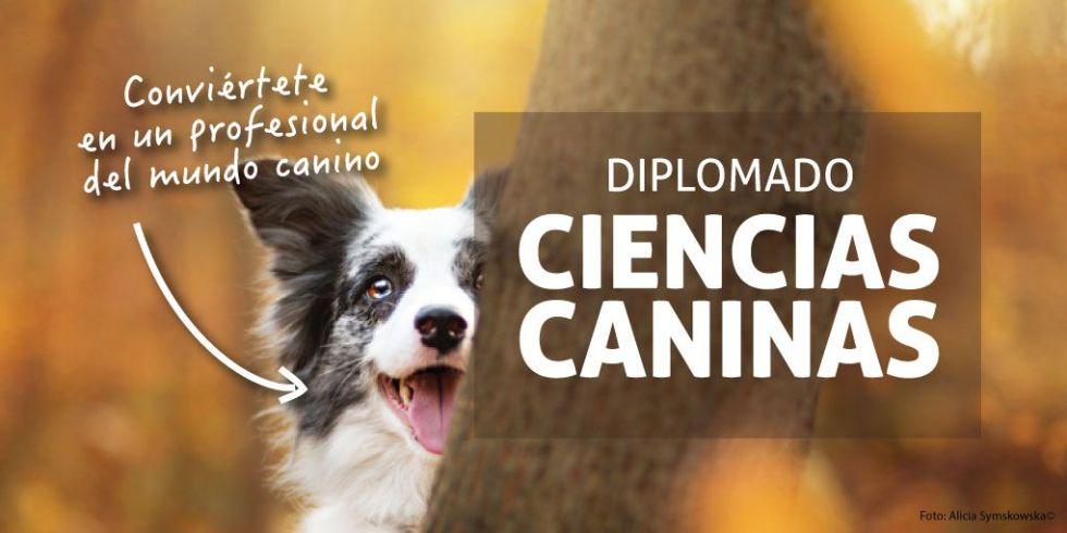 promo-diplomado-banner01