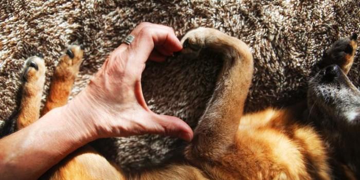 Necesidades Emocionales De Los Perros
