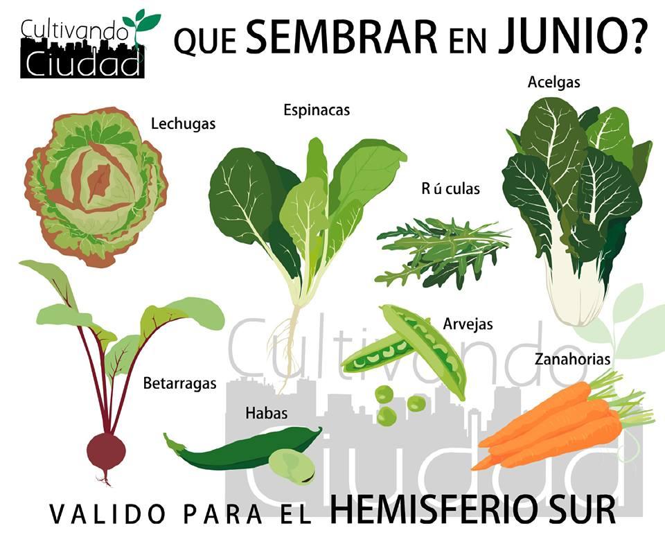 La huerta en invierno qu sembrar en junio supercampo - Que plantar en el huerto ...
