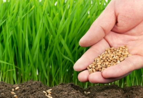 Huerta paso a paso qu sembrar en primavera supercampo - Cuando plantar cesped ...