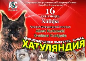 Выставка кошек Hatuliandia. Израиль.