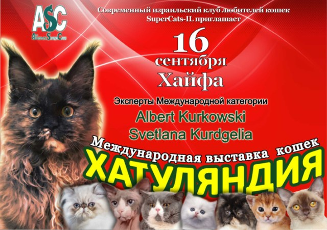 Хаутлянлия - выставка кошек 16.09-2017 в Хайфе