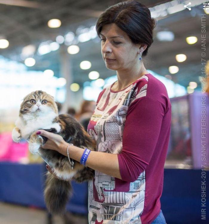 Кошка породы Хайленд-фолд Натальи Попокиной