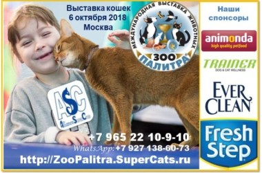SuperCats invitation for ZooPalitra