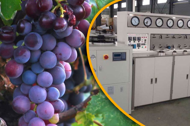Supercritical Carbon Dioxide Extraction of Grape Seed Oil