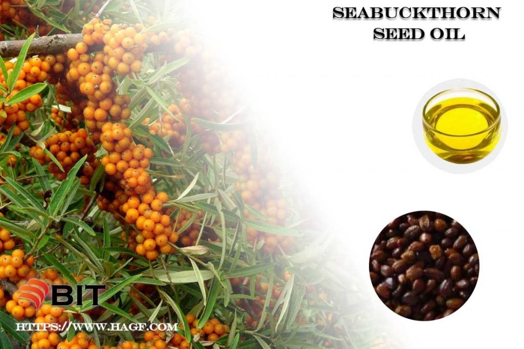 Supercritical CO2 Extraction of Seabuckthorn Seed Oil