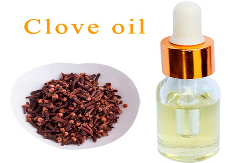 Clove oil extracted by supercritical CO2
