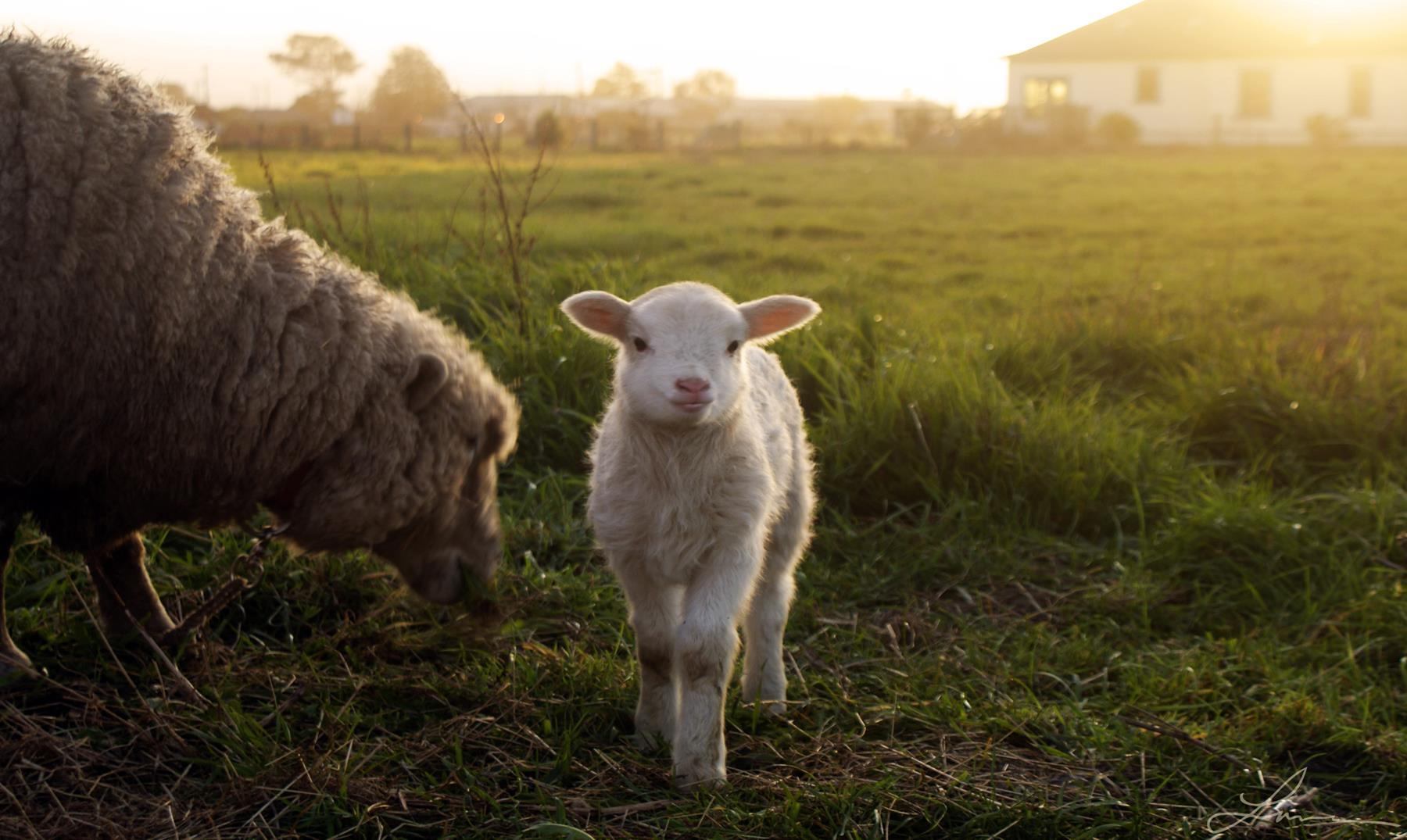 fotos de animales de granja