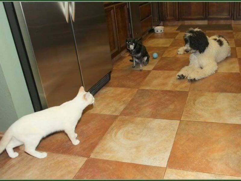 cats and dog training method