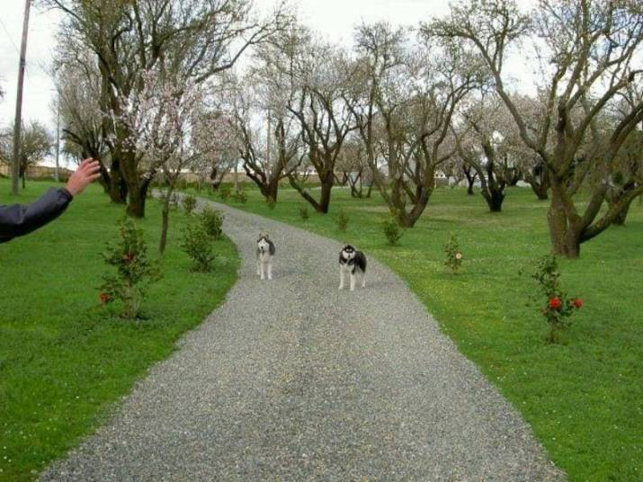 best dog training method in sacramento