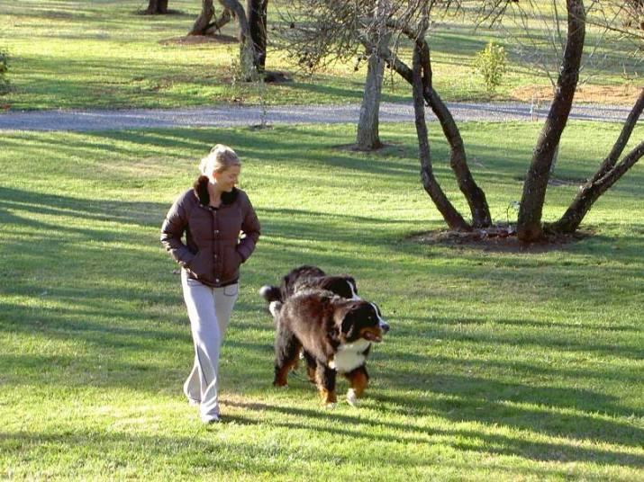 service animals sacramento