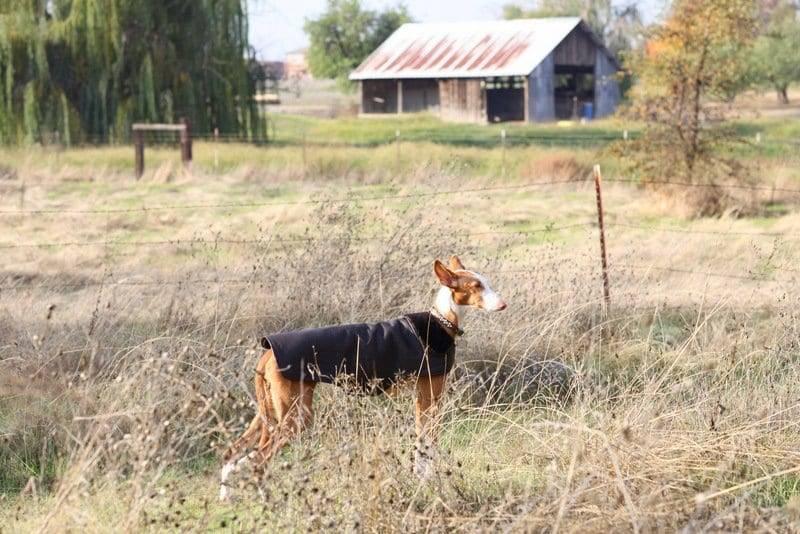 kyla off leash dog training in sacramento