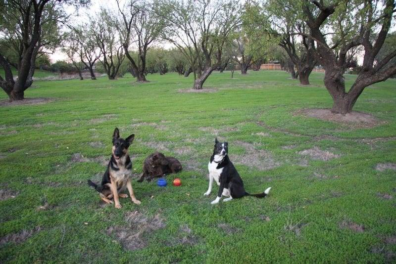 dog boot camp in sacramento