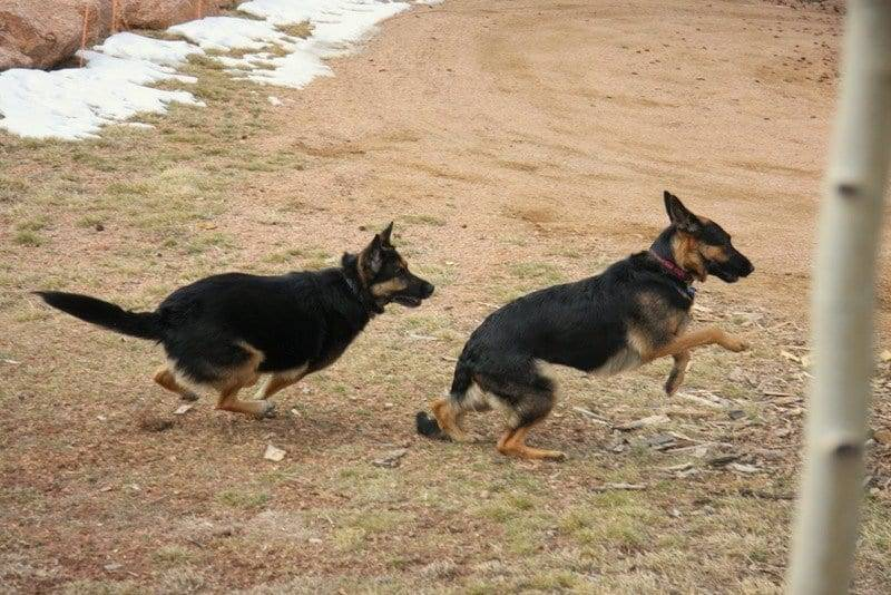 service dog in sacramento