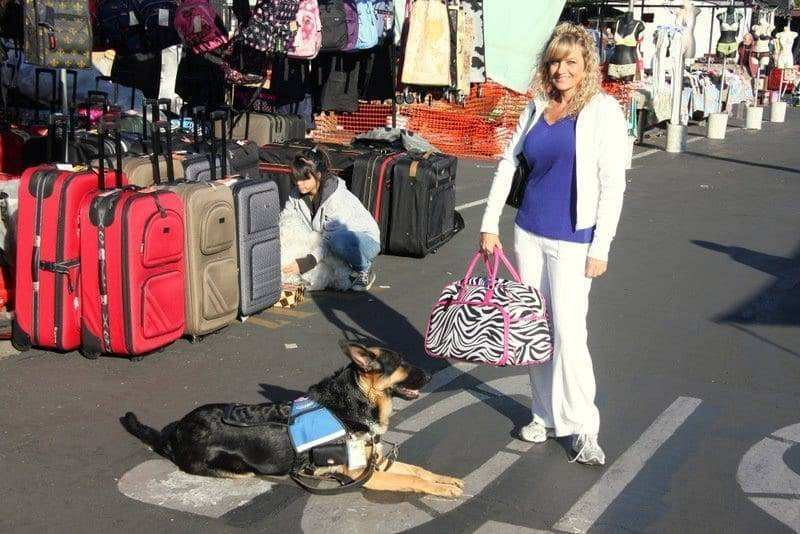 service dog training sacramento
