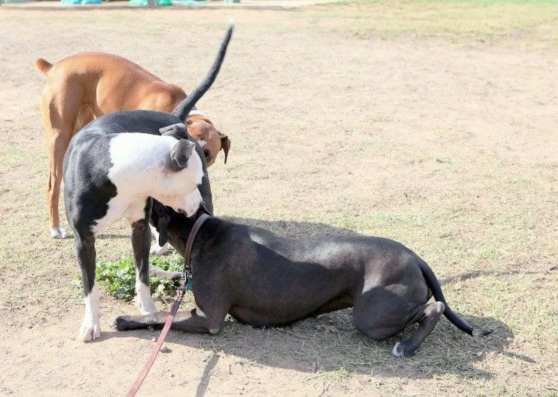 dog park sacramento