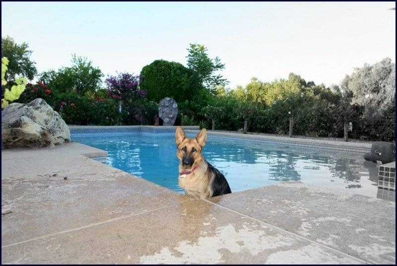 sacramento dog facility