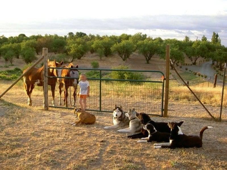 assistance dogs sacramento